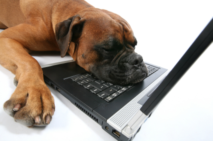 bored-dog-computer